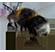 Ferns Lodge Bees