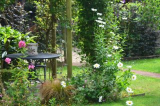 The pergola gives shade and plenty of colour with the stocks, giant daisies and climbers. | NGS Garden Ferns Lodge