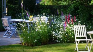 Daisies, roses, foxgloves in abundance in time for the first NGS opening. | NGS Garden Ferns Lodge