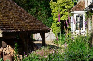 Moss on the garage roof with geranium, foxglove, and geranium below. | NGS Garden Ferns Lodge