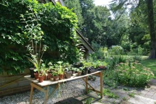 We also sell plants! We are ready for our first opening. | NGS Garden Ferns Lodge
