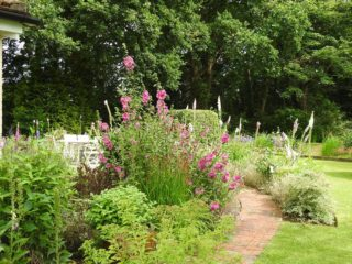 Late spring, the foxgloves are almost done. | NGS Garden Ferns Lodge