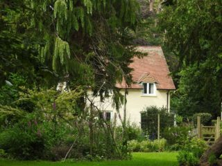 Fantastic Cyprus shields the Lodge house. | NGS Garden Ferns Lodge