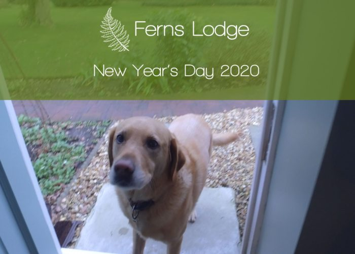 ferns-lodge-new-years-day-2020-thumbnail-2