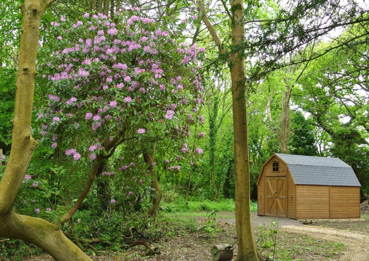 rhododendron-season-3