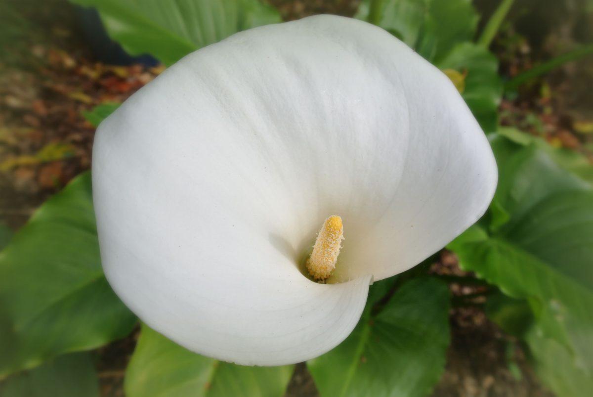 rhododendron-season-7